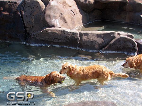 Golden Swim Party 008