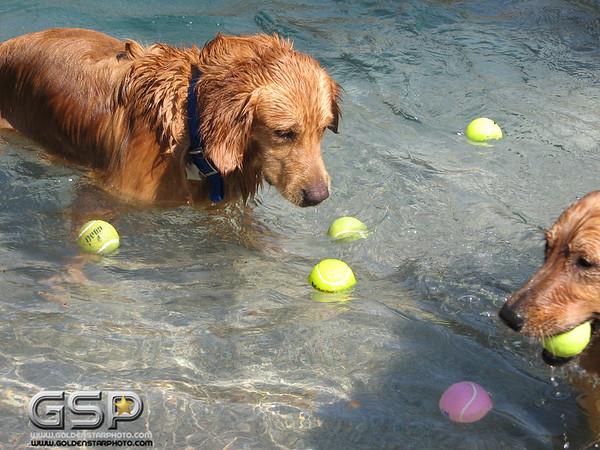 Golden Swim Party 037