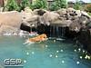 Golden Swim Party 083