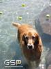 Golden Swim Party 069