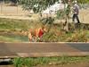 Harvest Romp 08 278