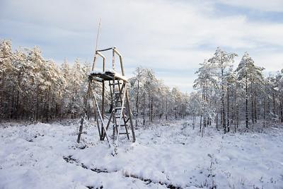 Medību tornis Cenas tīreļa malā
