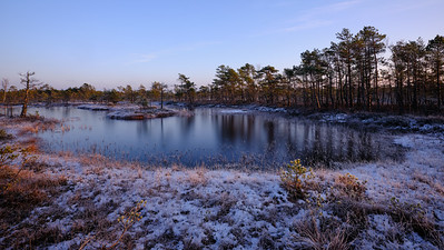 Bog lake in winter