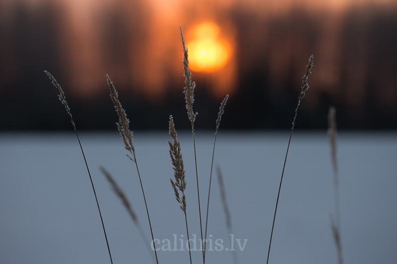Ziemas saullēkts