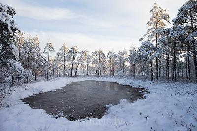 Akacis Cenas tīrelī ziemā