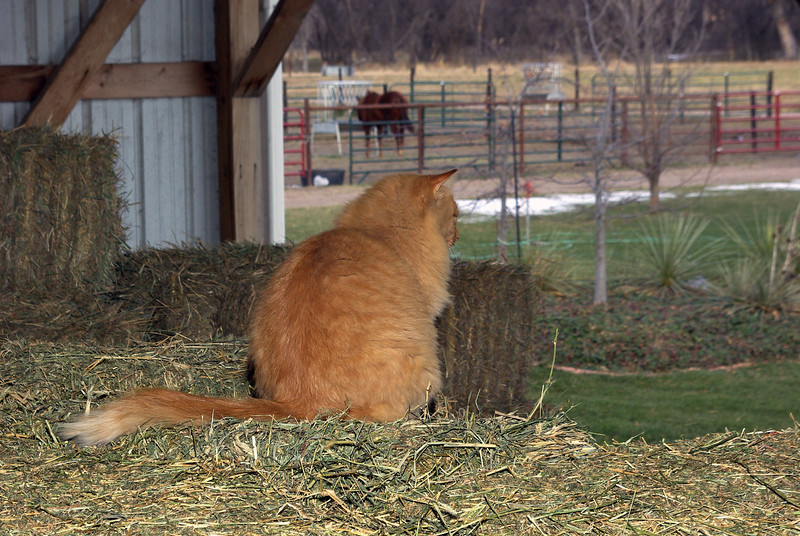 Barn cat, Elm Creek, NE (Nov 2007)