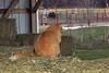 Barn cat, Elm Creek, NE (Nov 2007)