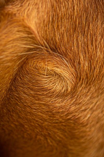 2020 - Matthew King dog portraits 018