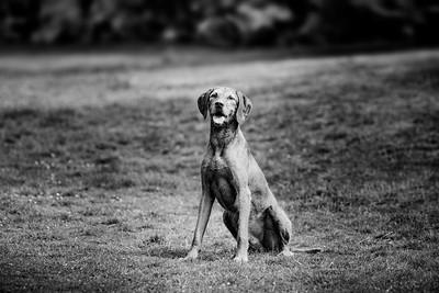 2020 - Matthew King dog portraits 013-2