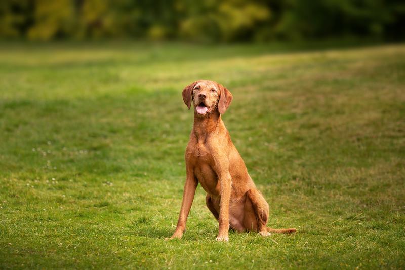 2020 - Matthew King dog portraits 013