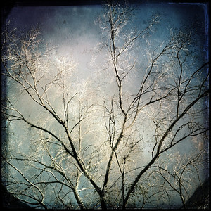 Again the image of the white wood flashed before my eyes, it's thin branches reaching up to the sky. It was like a dream, only more real than what the unconscious mind can simply reveal in the depths of sleep...