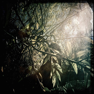 I could sense the great ape was nearby. I could almost hear his breathing. We had travelled so far and I was not about to turn back now.  This torturous island, blanketed in an impenetrable fog, had to be the place of which the elders spoke...