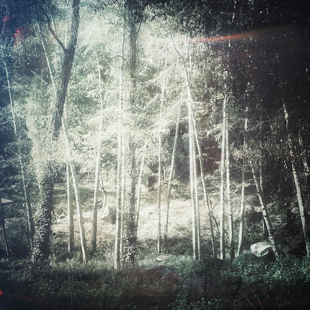 I asked about the ghost-light and they led me just behind the clearing. It was then that I saw the forest...