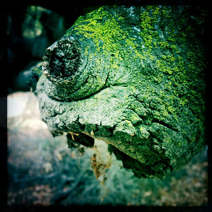 The lizard king spat and wretched as it emerged from its winter slumber. Hibernation had ended early...
