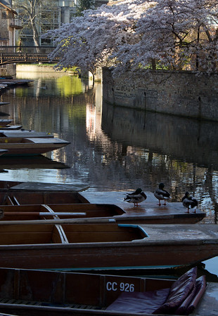 Punts with ducks