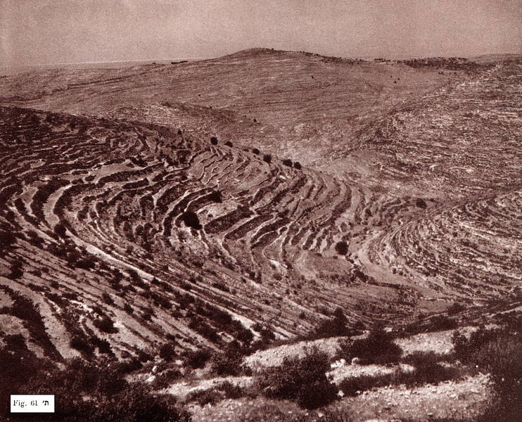 Fig. 61. Natural Terraces
