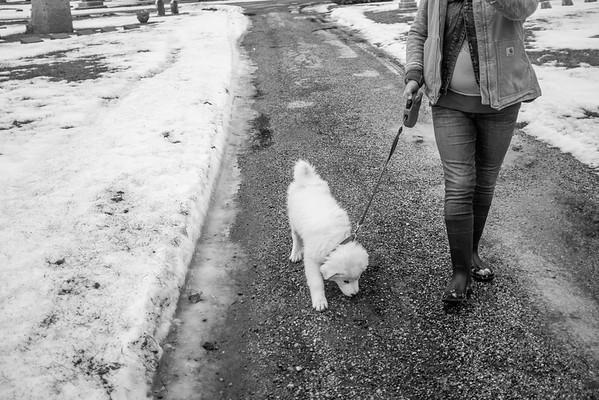 Rockford Walk