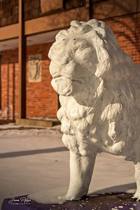 Lion statue on the front lawn of the Sigma Alpha Epsilon house on the University of South Dakota. Enjoy and hold hands.