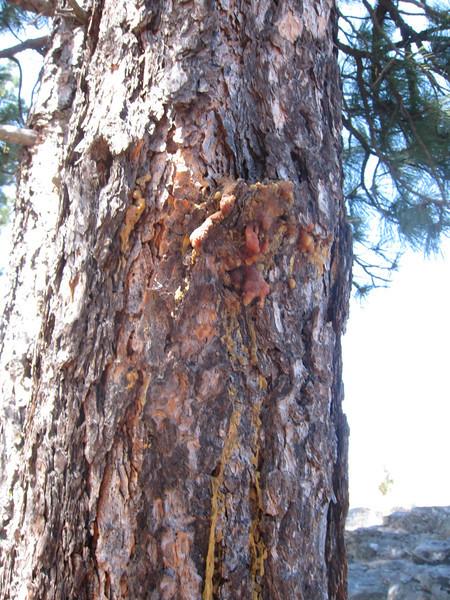 Weird tree stuff.