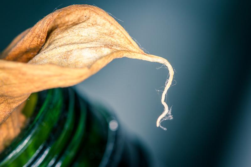 Dried Lily in a Bottle II