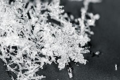Snowflake Focus Stack #2