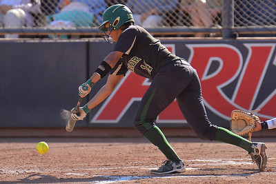 TUCSON, AZ - MAY 28:  Ari Hawkins #14 of the Baylor Bears bunts the ball during game three of the NCAA Div. I Super Regional against the Arizona Wildcats on May 26, 2017 at Hillenbrand Stadium in Tucson, Arizona.  (Photo by Sam Wasson)