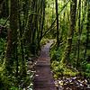 Boardwalk along the Cascada trail in Chilean Patagonia's Parque Pumalin.