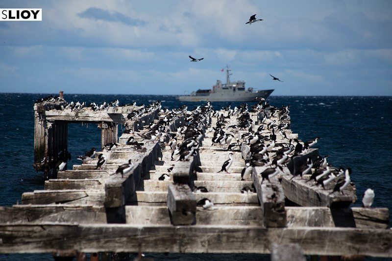 Birds on the ruined jetty of the town of Punta Arenas, in Chilean Patagonia.