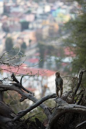 A lone monkey at the Swayambhu Monkey Temple in Kathmandu, Nepal.
