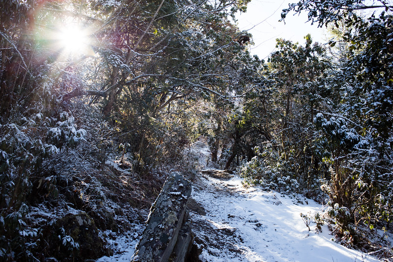 Snowy forest scene above Tatopani village along the Tamang Heritage Trail in Nepal.