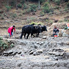 Tamang farmers prepare a field for planting in Chilime village along the Tamang Heritage Trail in Nepal.