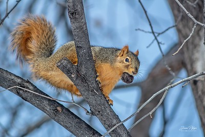 A squirrel holding a nut in a tree. Enjoy and hold hands.