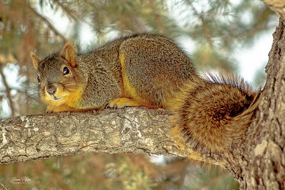 Squirrel hiding in the tree. Enjoy and hold hands.