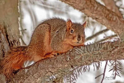 A squirrel hiding in a tree. Enjoy and hold hands.