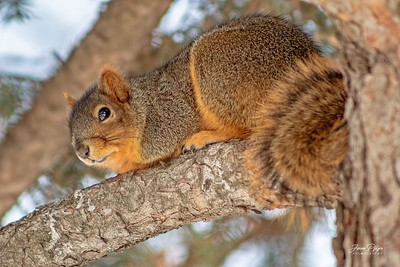 Squirrel in a tree. Enjoy and hold hands.