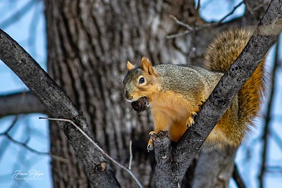 A squirrel in a tree with a nut. Enjoy and hold hands.