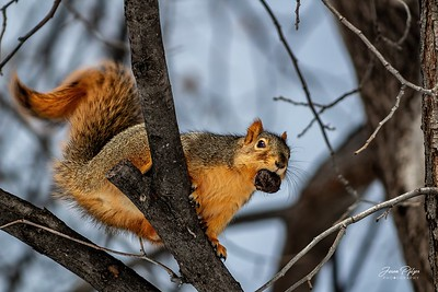 A squirrel with a nut in a tree. Enjoy and hold hands.