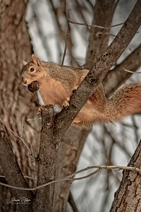 A squirrel in a tree with a nut, Enjoy and hold hands.