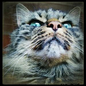 Katten Kleo