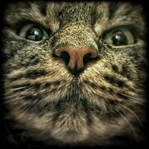 Plein chat