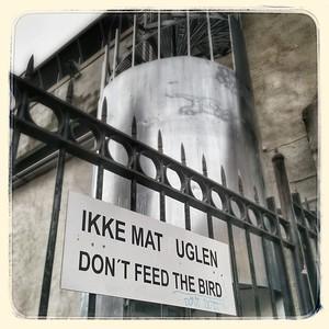 Ikke mat uglen