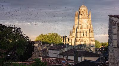 Les étourneaux de la cathédrale