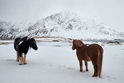 Horses in winter landscape