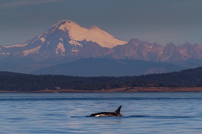 Mt. Baker with Orca
