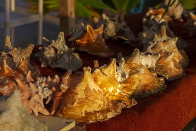 Conchs at Dawn