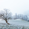 A cold start / Welschenrohr, Switzerland