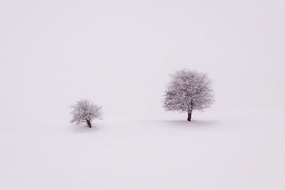 Lonely trees / Füssen, Germany