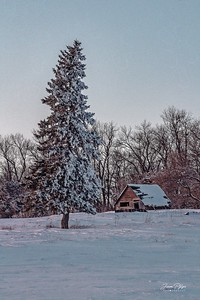 Abandoned homestead and shed in northern South Dakota. Enjoy and hold hands.