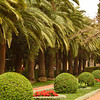 В Бахайском саду. Хайфа.