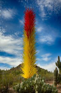 Desert Botanical Garden - Phoenix, Arizona.   Dale Chihuly artwork.